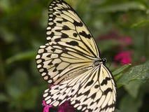 бумага змея бабочки Стоковые Изображения