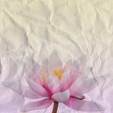 Бумага лилии воды Стоковая Фотография
