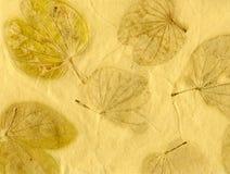 бумага листьев Стоковая Фотография