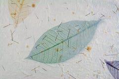 бумага листьев Стоковые Фотографии RF