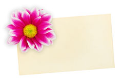 бумага приветствию цветка карточки Стоковые Фотографии RF