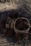 Бумага создавая программу-оболочку, винтажная зеленая лента деревенского подарка рождества коричневая, конусы сосны стоковое фото