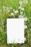 бумага травы пустой карточки Стоковые Изображения RF