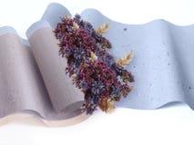 бумага трав Стоковая Фотография RF