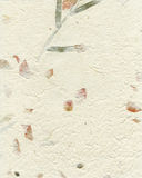 Бумага цвета слоновой кости волокна шелковицы Стоковое фото RF