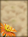 бумага цветка граници Стоковое фото RF