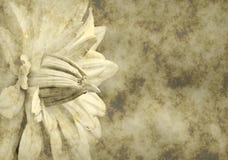 бумага grunge цветка предпосылки Стоковое Изображение RF