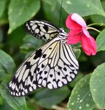 Бумажная бабочка змея Стоковые Фото