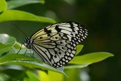 Бумажная бабочка змея Стоковые Изображения RF