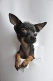 бумажная игрушка terrier Стоковые Изображения RF