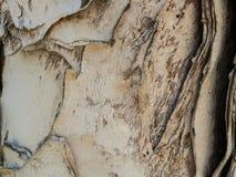 Бумажная кора дерева с designs-5022249 Стоковое фото RF