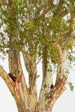 Бумажное дерево расшивы Стоковое Изображение RF