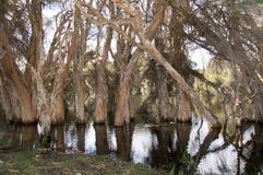 Бумажные отражения дерева Стоковые Фото