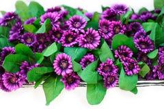 Бумажные цветки фиолетовые Стоковые Фотографии RF