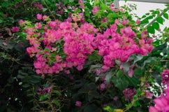 Бумажные цветки Стоковое Изображение