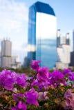 Бумажный цветок в городе стоковые фото