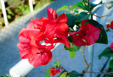 Бумажный цветок Стоковые Фото