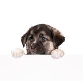 бумажный щенок Стоковое Изображение