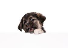 бумажный щенок Стоковое Изображение RF