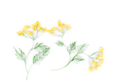 Бумажный quilling, цветастые бумажные цветки Стоковое Изображение