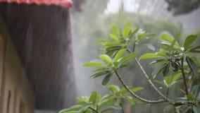 Бунгало в дождевом лесе на острове Samui Koh, во время тропического ливня с звуком дождя и изменения фокусируют сток-видео