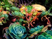 Бунт цвета Стоковое Изображение RF