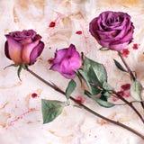 3 бургундских розовых цветка на покрашенном скомканном достигшем возраста бумажном конце предпосылки вверх, приглашении праздника стоковое фото