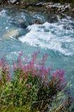 Бурное река горы в Альпах Стоковое Изображение