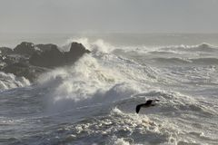 Бурное скалистое побережье Стоковая Фотография