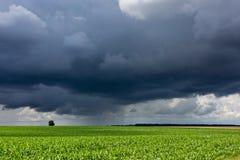 Бурные небо и поле Стоковая Фотография