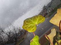 Бурные облака предпосылки с живым заводом стоковое фото rf