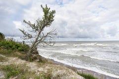 Бурный берег моря Стоковые Изображения