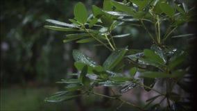 Бурный день на листьях видеоматериал