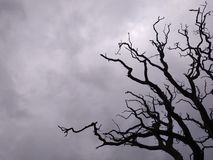 Бурный силуэт дерева неба стоковое изображение rf