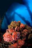 буровая вышка Стоковое фото RF