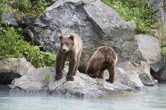 2 бурого медведя около реки Стоковое Фото