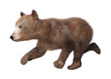 бурый медведь Cub перевода 3D на белизне Стоковые Изображения RF