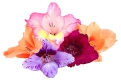 5 бутонов цветка гладиолуса Стоковое Изображение RF