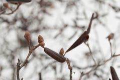 Бутоны азалии в снеге Стоковая Фотография RF