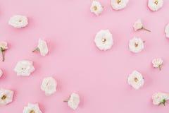 Бутоны белых роз изолированные на розовой предпосылке Плоское положение, взгляд сверху диаграмма малое смычков букетов картины цв Стоковая Фотография