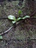 Бутоны дерева стоковое изображение