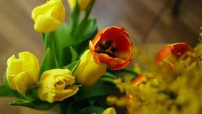 Бутоны красного и желтого крупного плана тюльпанов стоковое изображение rf