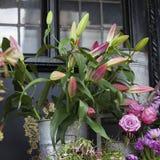 Бутоны красных лилий и фиолетовых роз как украшение входа к дому Стоковое фото RF