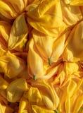 Бутоны отрезанные предпосылкой желтые, вянуть тюльпаны, съемка сверху Стоковая Фотография