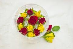 Бутоны роз в контейнере на белизне Стоковое Фото