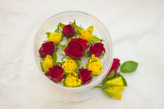Бутоны роз в контейнере на белой предпосылке Стоковая Фотография