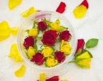 Бутоны роз в контейнере Стоковая Фотография RF
