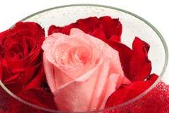 Бутоны роз в круглой стеклянной вазе Стоковая Фотография RF