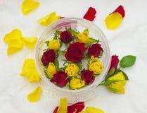 Бутоны роз Стоковые Изображения