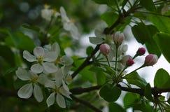 Бутоны цветка окруженные белыми цветками стоковое изображение rf
